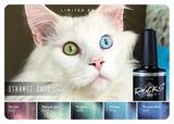 Strange Cats   Collection + 1 gratis magneet_